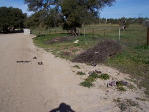 Booties everywhere-West of Tierra Del Sol