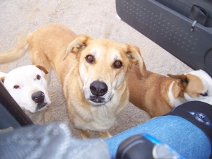 Dozer, Hotshot and Freckles greet me at the Point