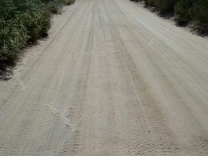 Big snake tracks