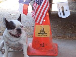 My little devil dog-She's a fine Marine!