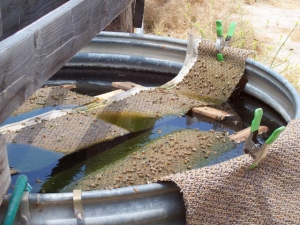 Rugs in trough to water the bees
