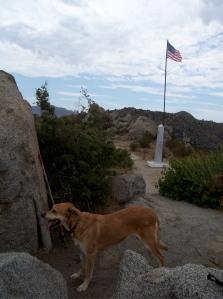 Top Dog at the 241