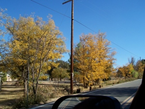 Autumn in Campo