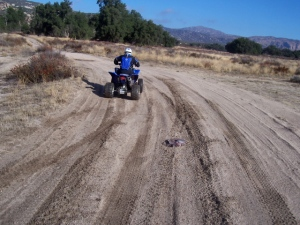 Off roader and bootie in the road to Hauser Canyon