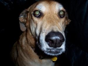 El perro de la frontera with seasonal affective disorder
