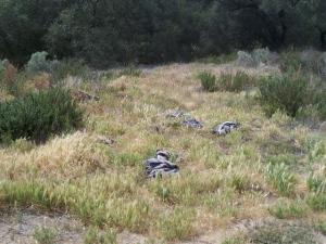 Bell Valley illegal litter