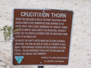 Crucifixion Thorn sign