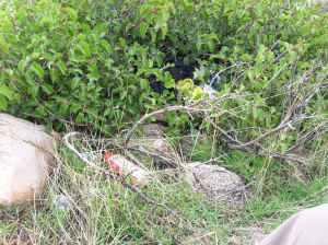 Nest in 14 Horseshoe area